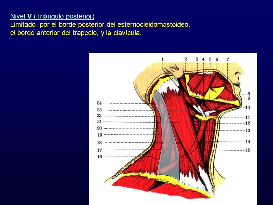 Nivel V (Triángulo posterior)