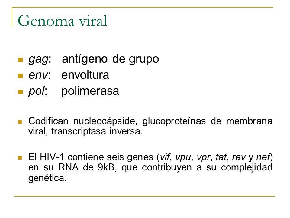 Genoma viral gag: antígeno de grupo env: envoltura pol: polimerasa