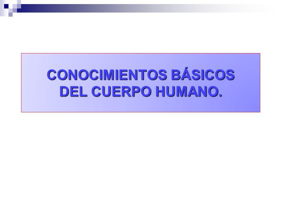 CONOCIMIENTOS BÁSICOS DEL CUERPO HUMANO.