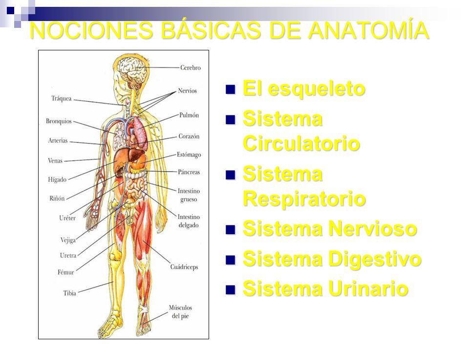 NOCIONES BÁSICAS DE ANATOMÍA