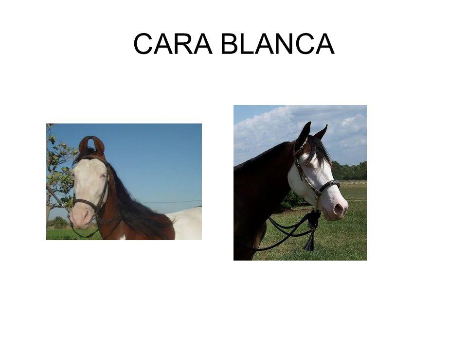 CARA BLANCA