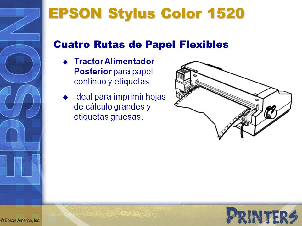 EPSON Stylus Color 1520 Cuatro Rutas de Papel Flexibles