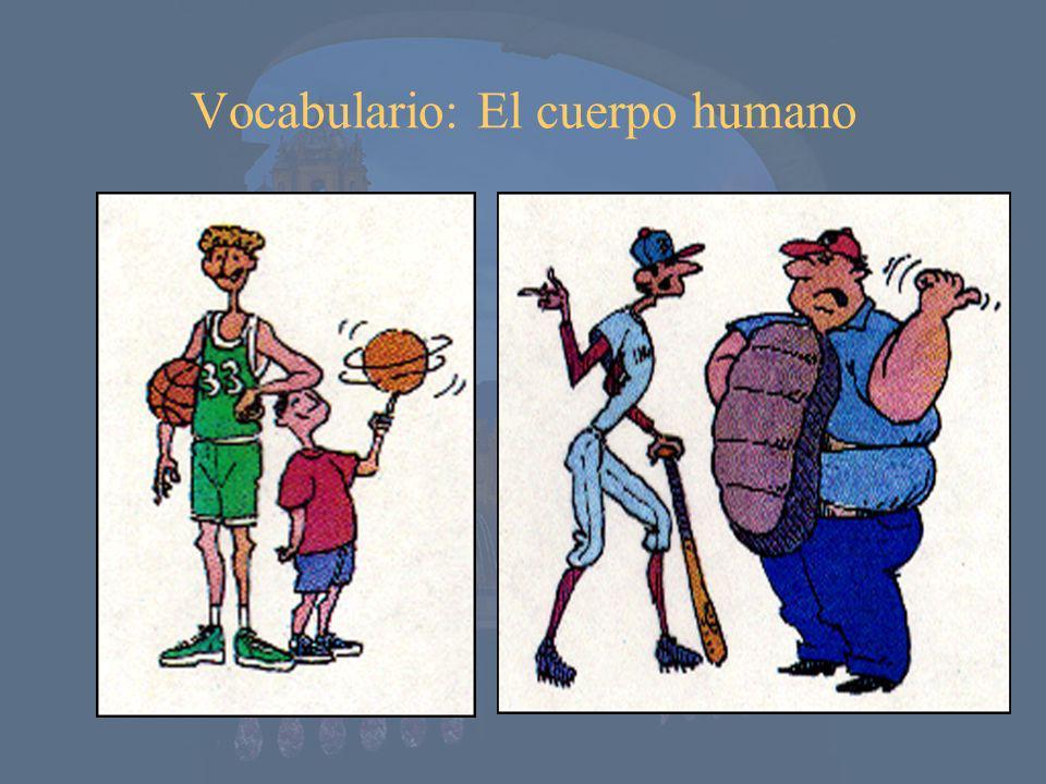 Vocabulario: El cuerpo humano