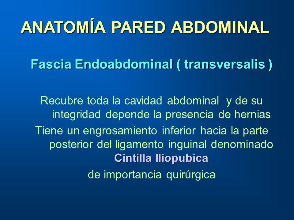 ANATOMÍA PARED ABDOMINAL Fascia Endoabdominal ( transversalis )