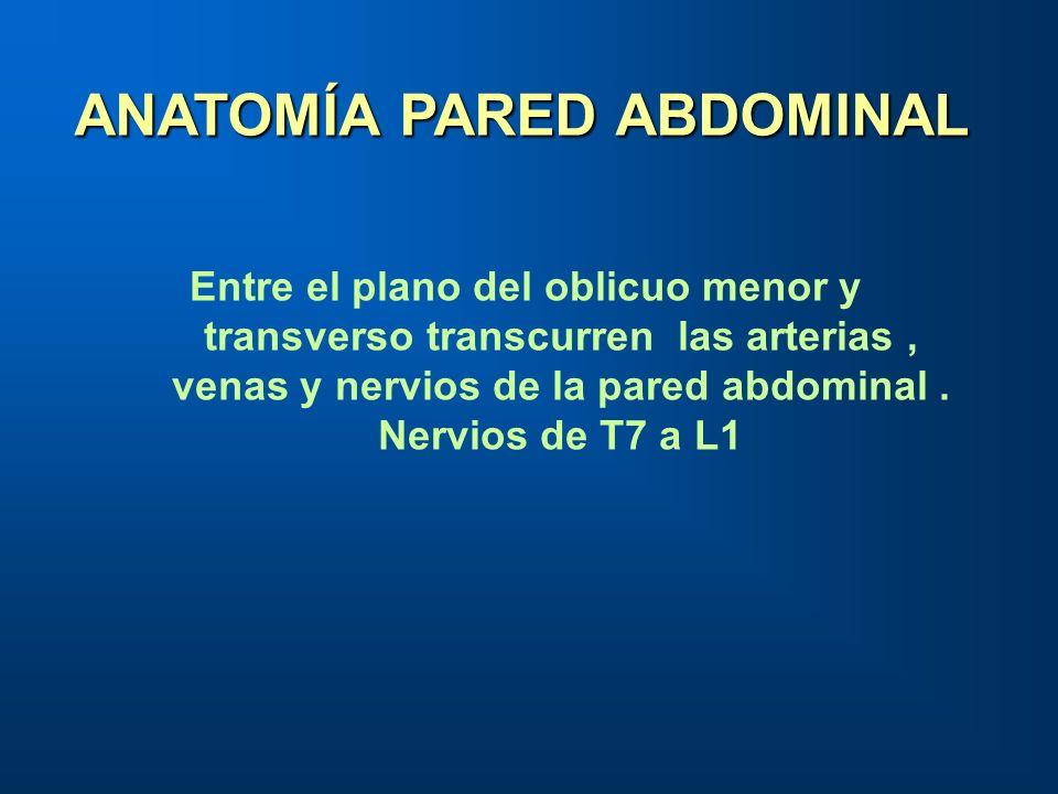 ANATOMÍA PARED ABDOMINAL