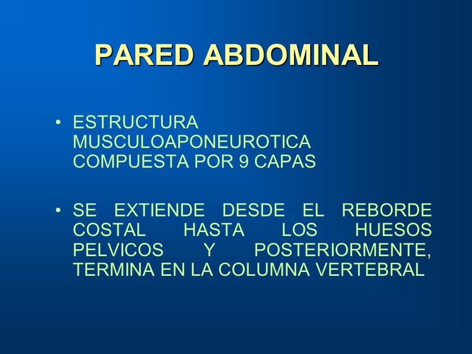 PARED ABDOMINAL ESTRUCTURA MUSCULOAPONEUROTICA COMPUESTA POR 9 CAPAS