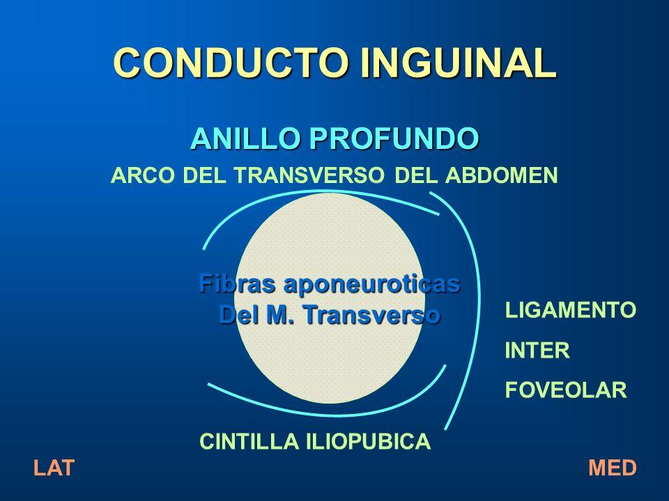 ARCO DEL TRANSVERSO DEL ABDOMEN