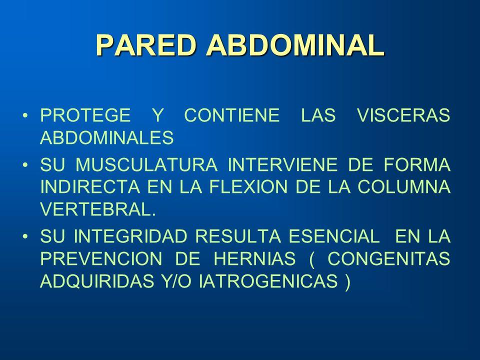 PARED ABDOMINAL PROTEGE Y CONTIENE LAS VISCERAS ABDOMINALES