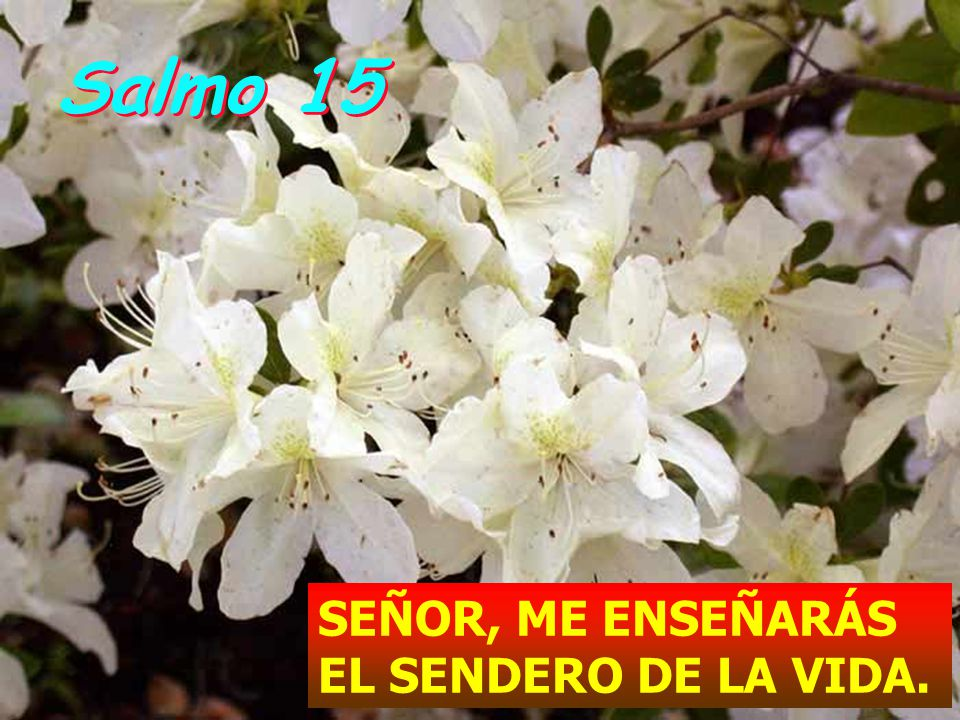 Salmo 15 SEÑOR, ME ENSEÑARÁS EL SENDERO DE LA VIDA.