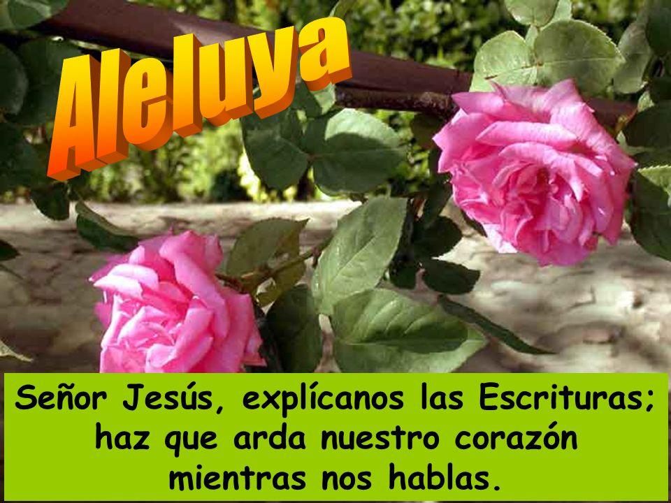 Aleluya Señor Jesús, explícanos las Escrituras; haz que arda nuestro corazón mientras nos hablas.
