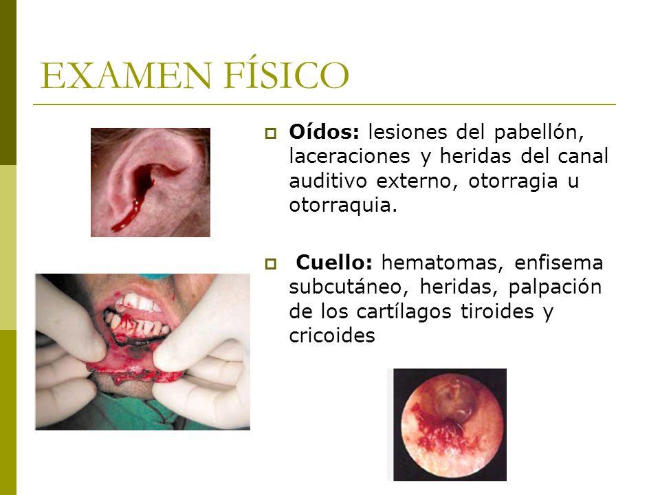 EXAMEN FÍSICO Oídos: lesiones del pabellón, laceraciones y heridas del canal auditivo externo, otorragia u otorraquia.