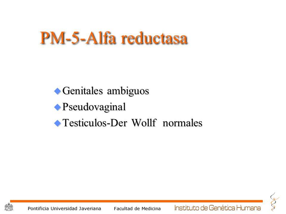 PM-5-Alfa reductasa Genitales ambiguos Pseudovaginal