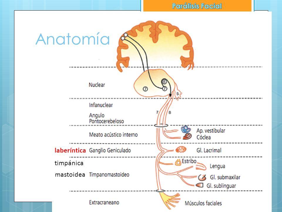 Anatomía Parálisis Facial laberíntica timpánica mastoidea