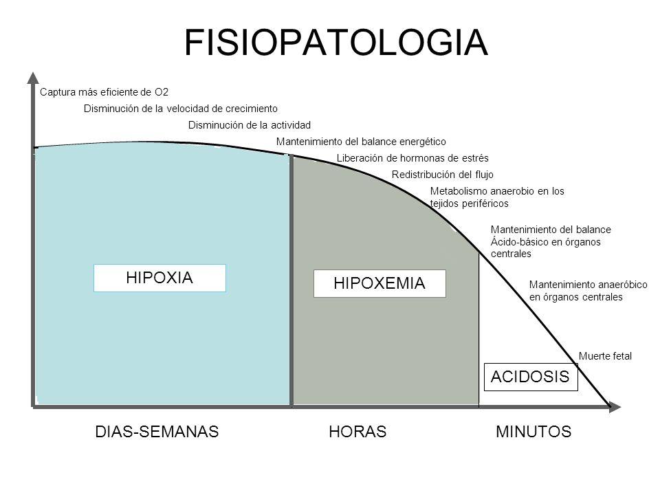 FISIOPATOLOGIA HIPOXIA HIPOXEMIA ACIDOSIS DIAS-SEMANAS HORAS MINUTOS