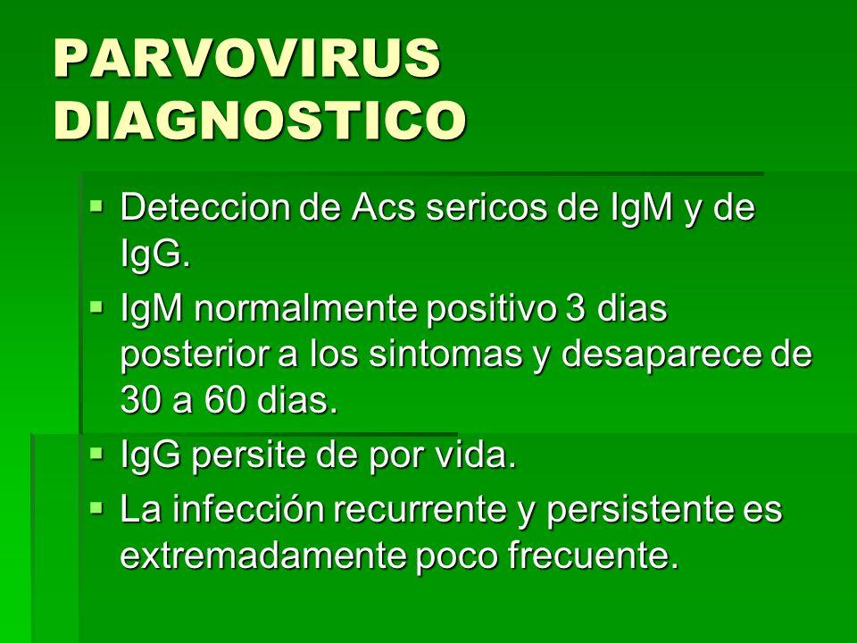 PARVOVIRUS DIAGNOSTICO