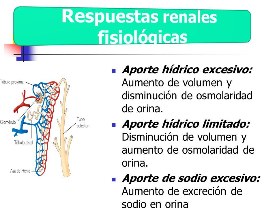 Respuestas renales fisiológicas