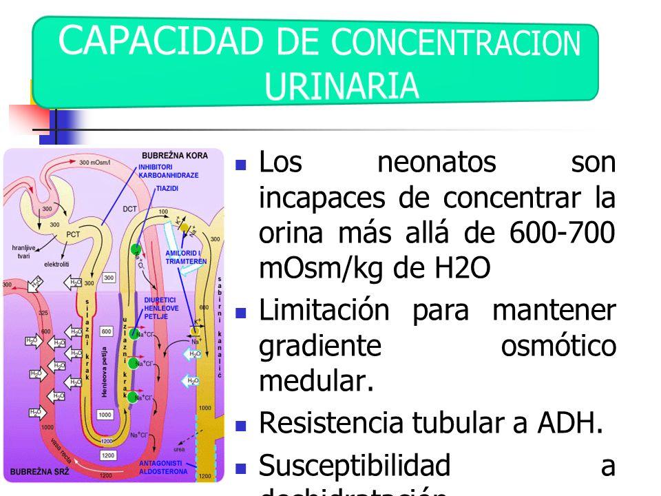CAPACIDAD DE CONCENTRACION URINARIA