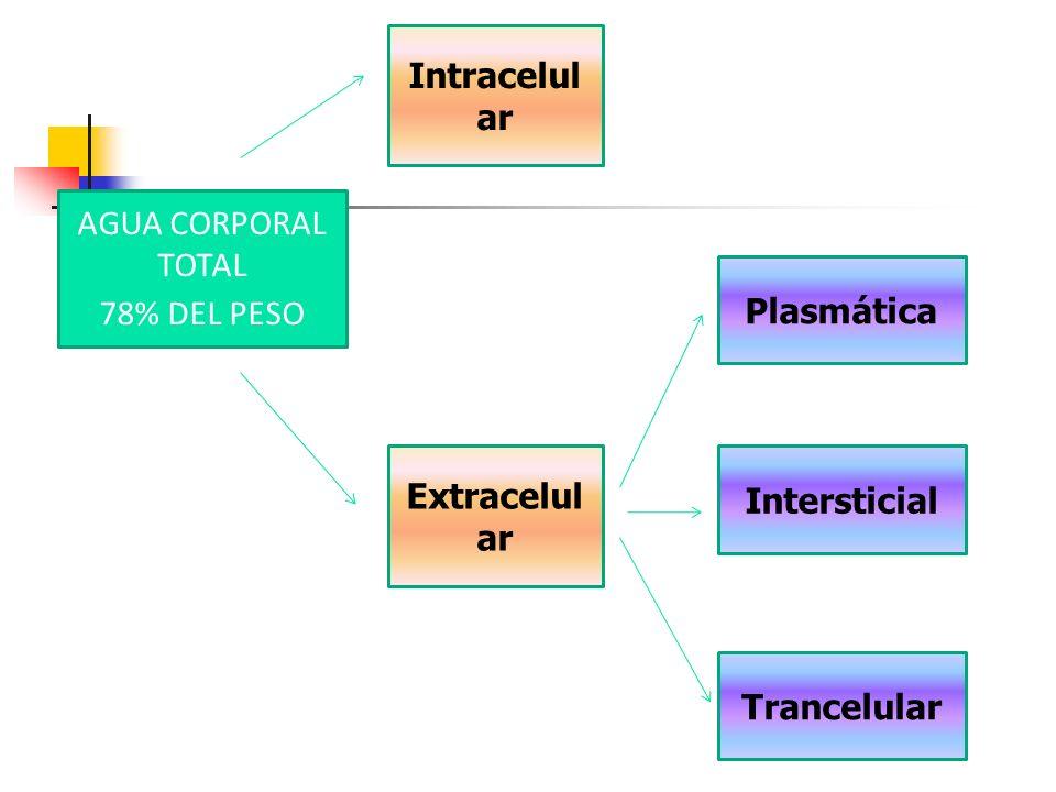 Intracelular AGUA CORPORAL TOTAL 78% DEL PESO Plasmática Extracelular Intersticial Trancelular