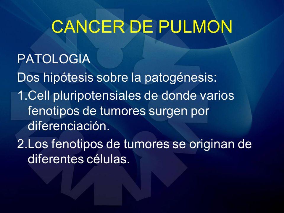 CANCER DE PULMON PATOLOGIA Dos hipótesis sobre la patogénesis: