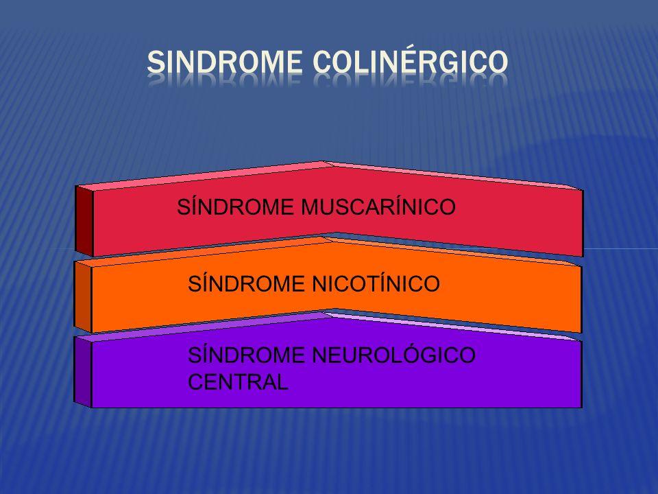 SINDROME COLINÉRGICO SÍNDROME MUSCARÍNICO SÍNDROME NICOTÍNICO