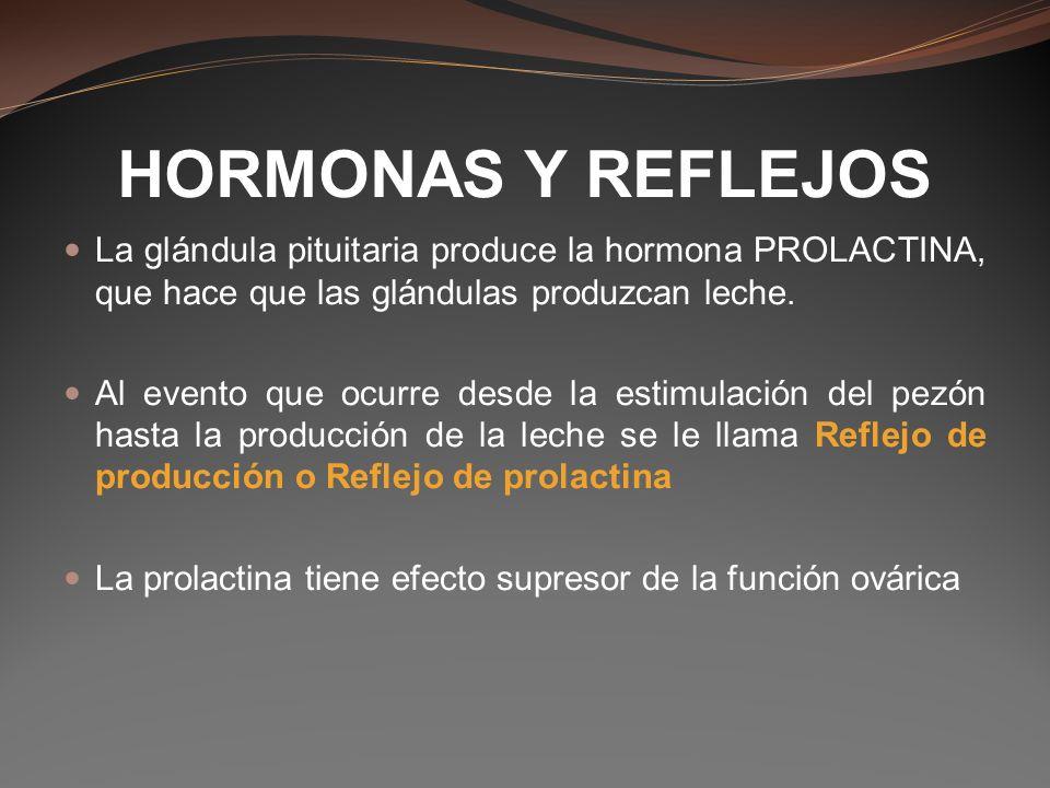 HORMONAS Y REFLEJOS La glándula pituitaria produce la hormona PROLACTINA, que hace que las glándulas produzcan leche.