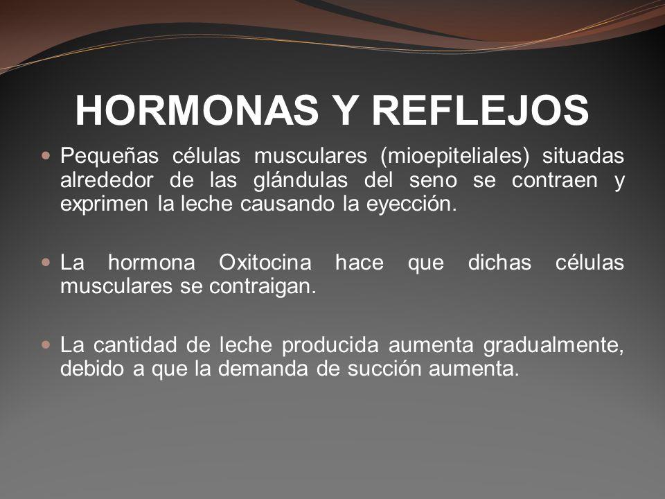 HORMONAS Y REFLEJOS