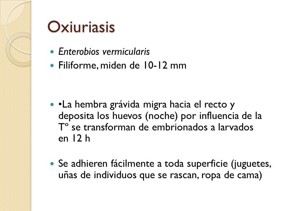 Oxiuriasis Enterobios vermicularis Filiforme, miden de 10-12 mm