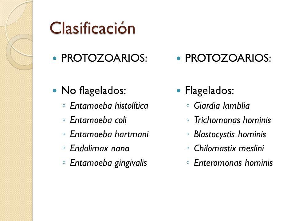 Clasificación PROTOZOARIOS: No flagelados: PROTOZOARIOS: Flagelados: