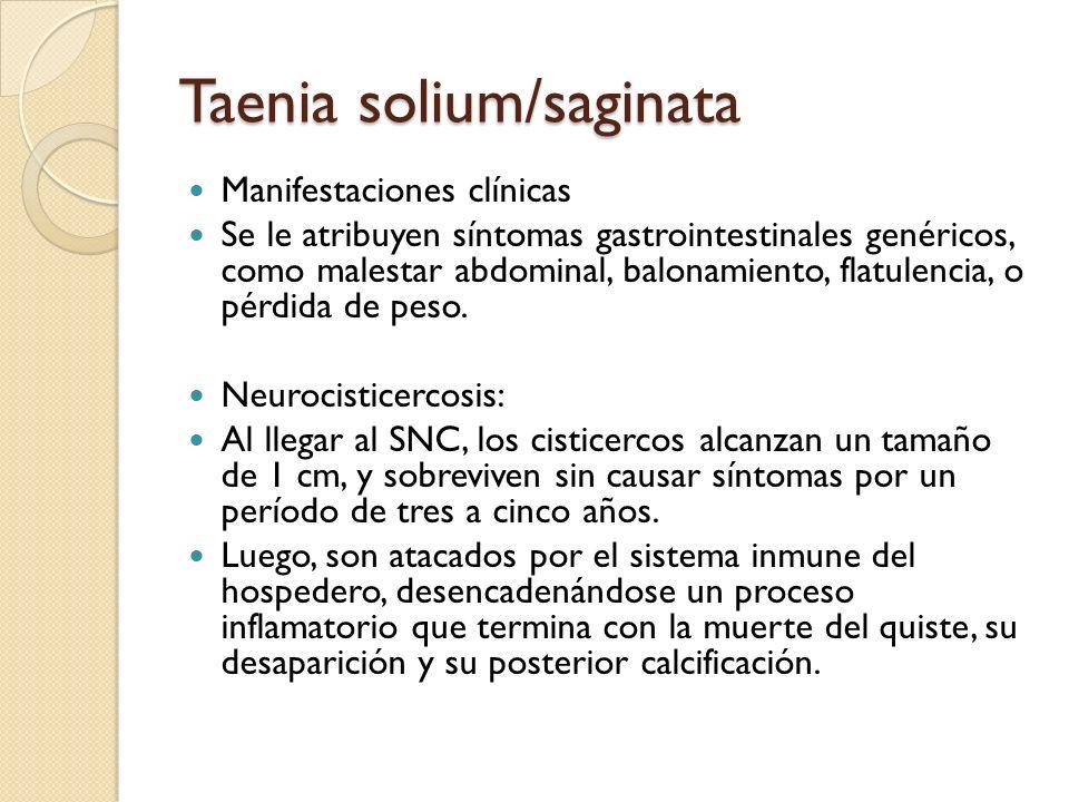Taenia solium/saginata