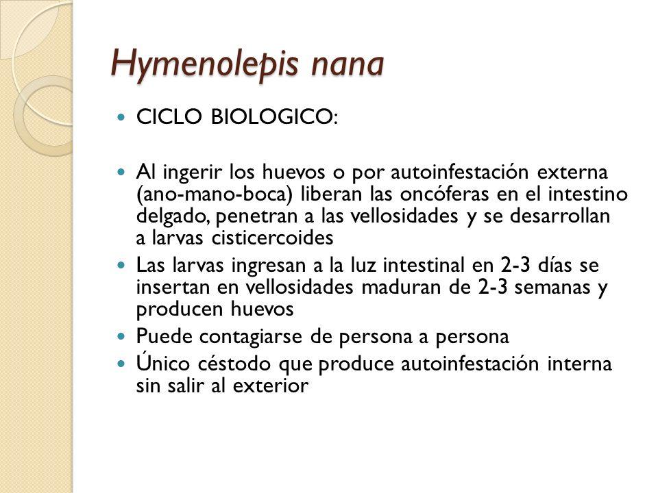 Hymenolepis nana CICLO BIOLOGICO: