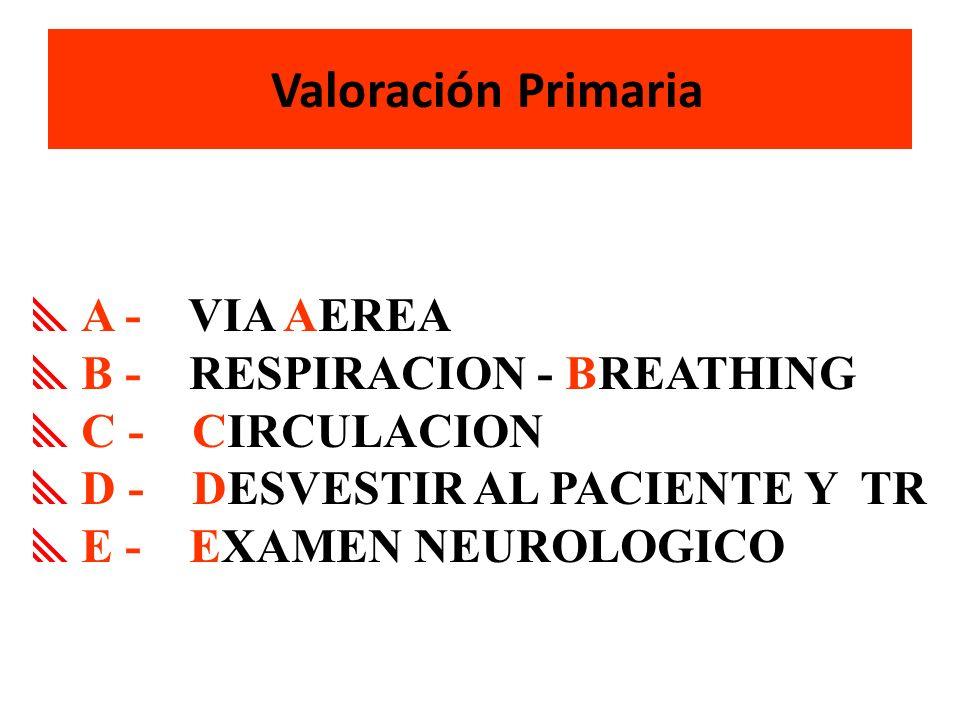 B - RESPIRACION - BREATHING C - CIRCULACION