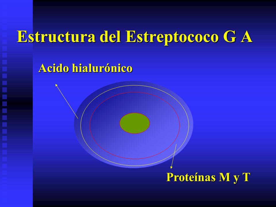 Estructura del Estreptococo G A