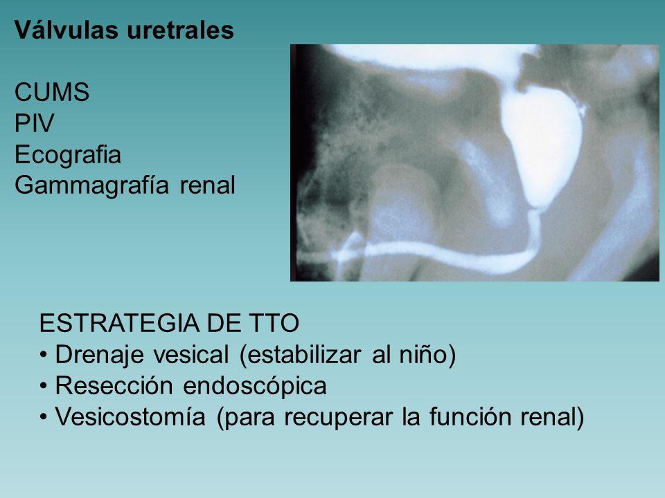 Válvulas uretrales CUMS. PIV. Ecografia. Gammagrafía renal. ESTRATEGIA DE TTO. Drenaje vesical (estabilizar al niño)