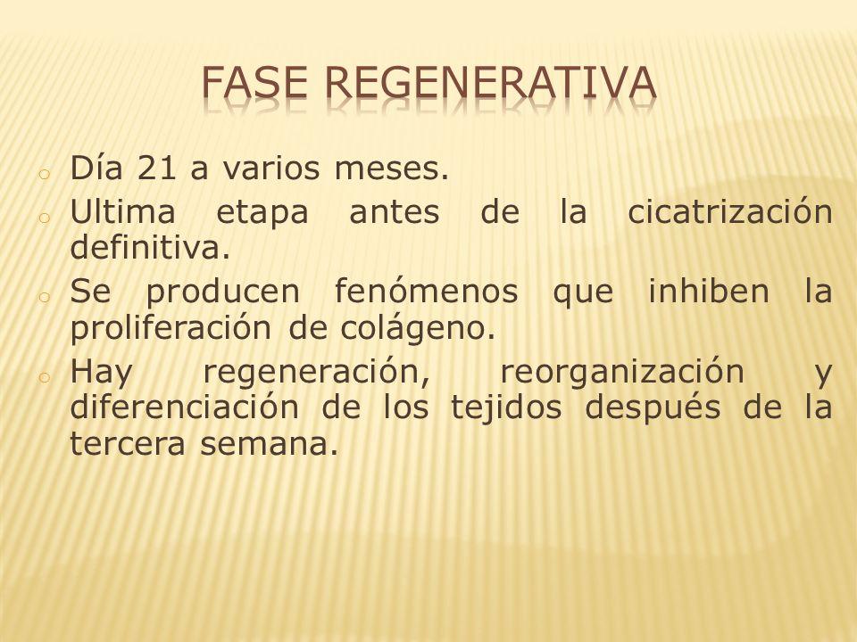 Fase Regenerativa Día 21 a varios meses.