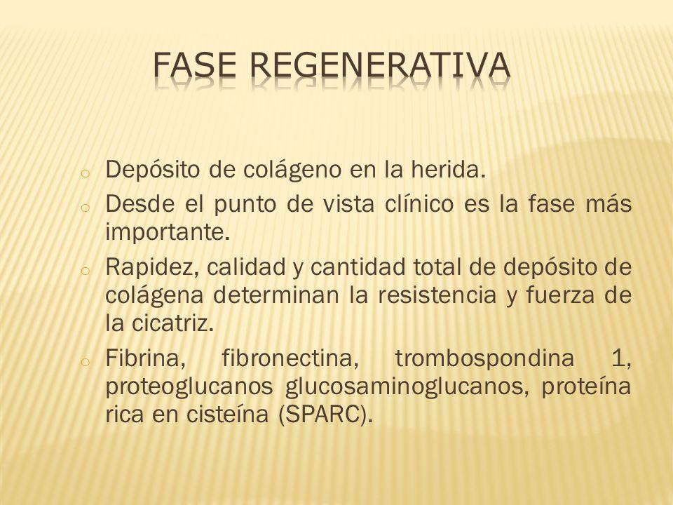 Fase Regenerativa Depósito de colágeno en la herida.