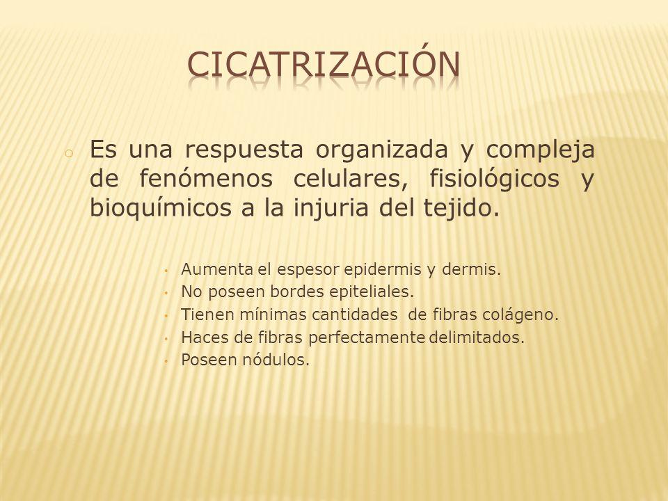 Cicatrización Es una respuesta organizada y compleja de fenómenos celulares, fisiológicos y bioquímicos a la injuria del tejido.