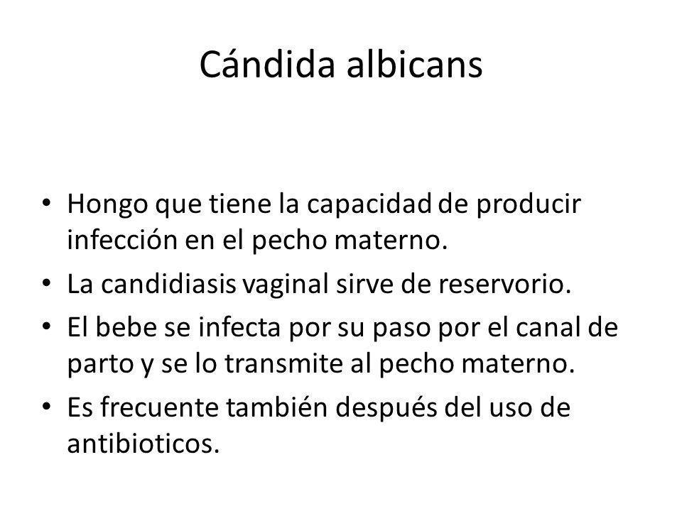 Cándida albicans Hongo que tiene la capacidad de producir infección en el pecho materno. La candidiasis vaginal sirve de reservorio.