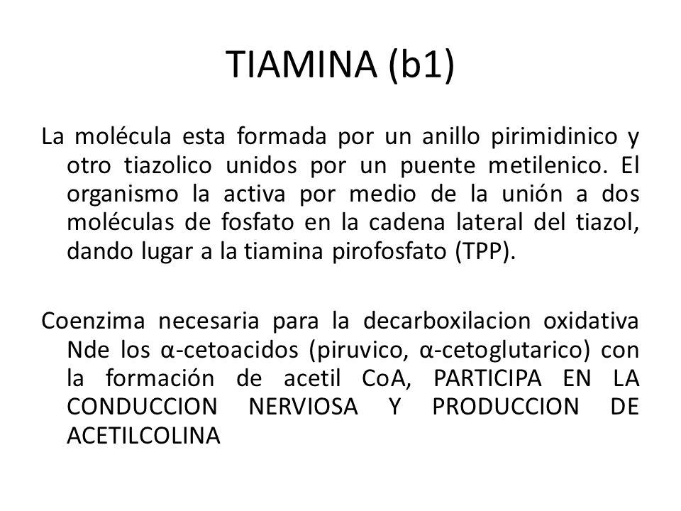TIAMINA (b1)