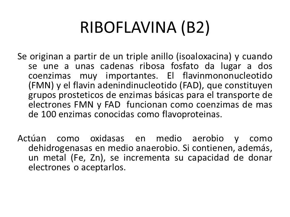 RIBOFLAVINA (B2)