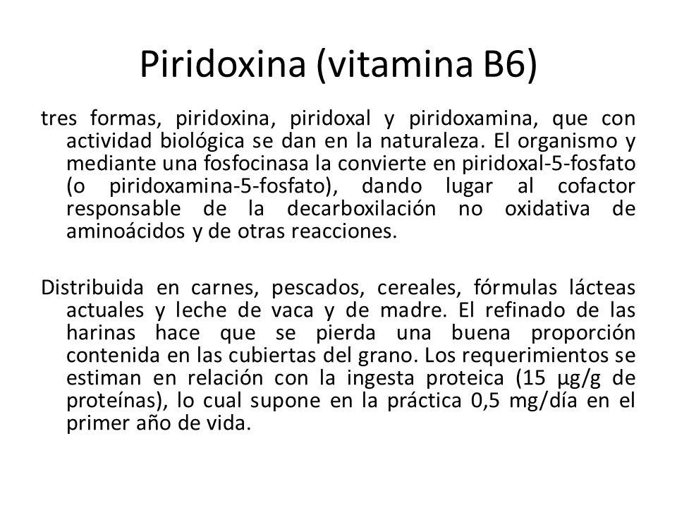 Piridoxina (vitamina B6)