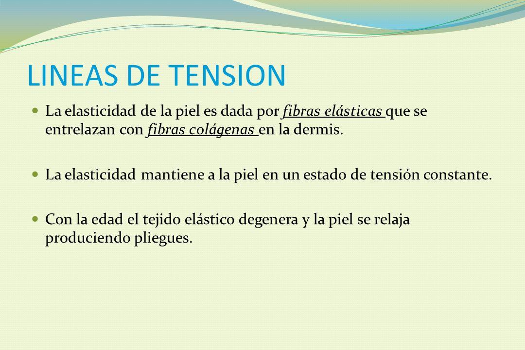 LINEAS DE TENSION La elasticidad de la piel es dada por fibras elásticas que se entrelazan con fibras colágenas en la dermis.
