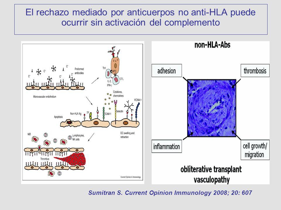 El rechazo mediado por anticuerpos no anti-HLA puede ocurrir sin activación del complemento