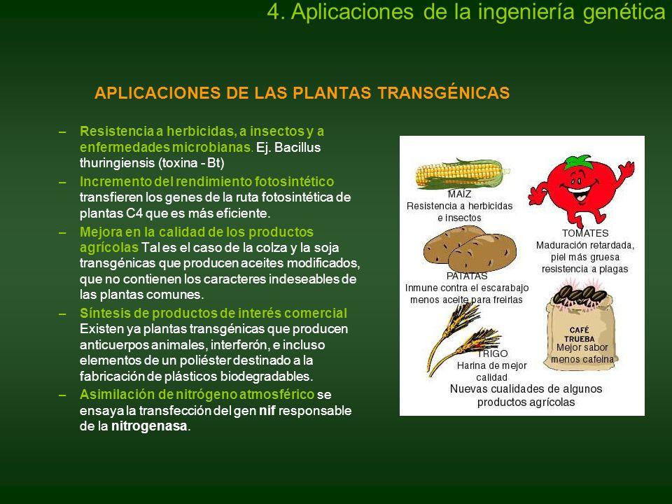 APLICACIONES DE LAS PLANTAS TRANSGÉNICAS