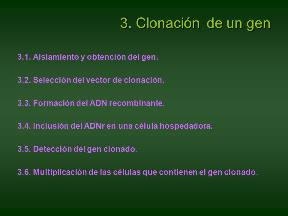 3. Clonación de un gen 3.1. Aislamiento y obtención del gen.