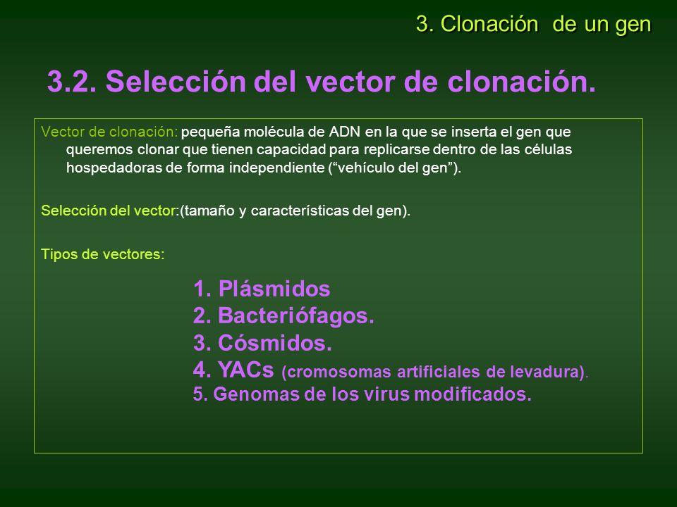 3.2. Selección del vector de clonación.