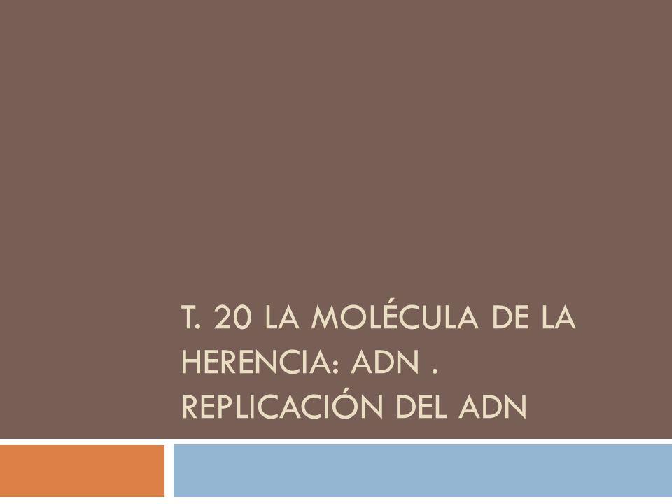 T. 20 LA MOLÉCULA DE LA HERENCIA: ADN . REPLICACIÓN DEL ADN