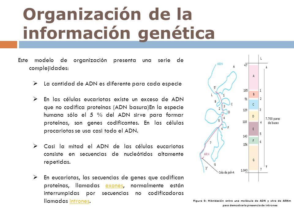 Organización de la información genética