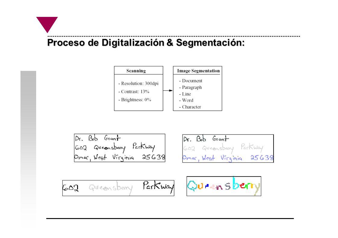 Proceso de Digitalización & Segmentación: