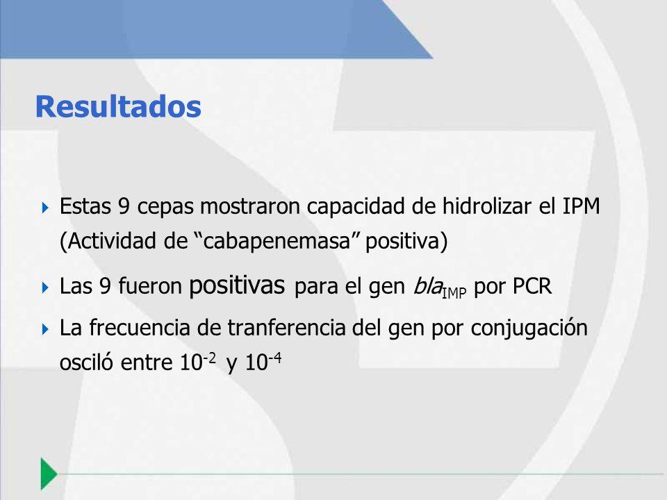 Resultados Estas 9 cepas mostraron capacidad de hidrolizar el IPM (Actividad de cabapenemasa positiva)