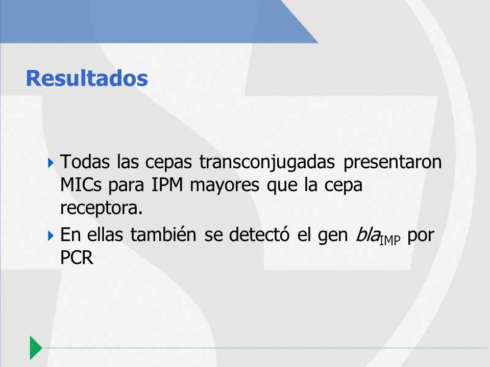 Resultados Todas las cepas transconjugadas presentaron MICs para IPM mayores que la cepa receptora.